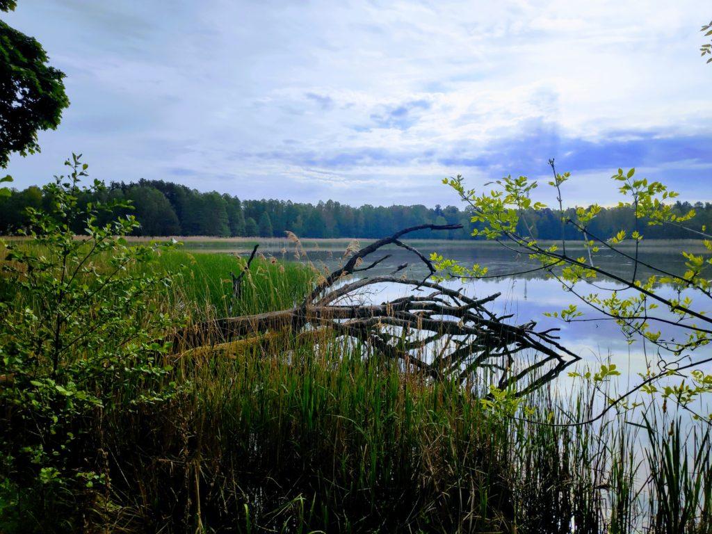 Rezerwat przyrody - Wydymacz.